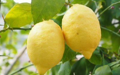 Zitronenöl – das ätherische Öl der Freude