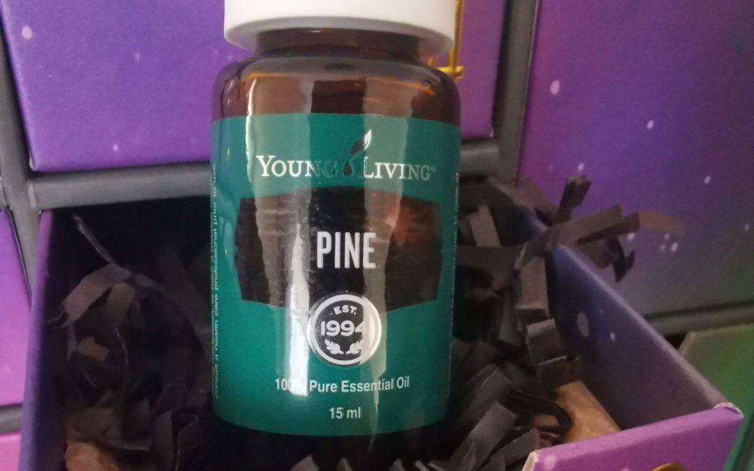 Kiefer Öl (Pinus silvestris) – das ätherische Öl der Ruhe